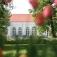 Orangerie Oranienburg