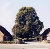 Kronshorster Lindenhof