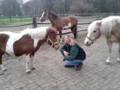 privater  Pferdeschutzhof