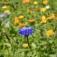 Ein Blumenstrauß für die Hausapotheke