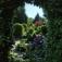 Fantasynacht im Garten