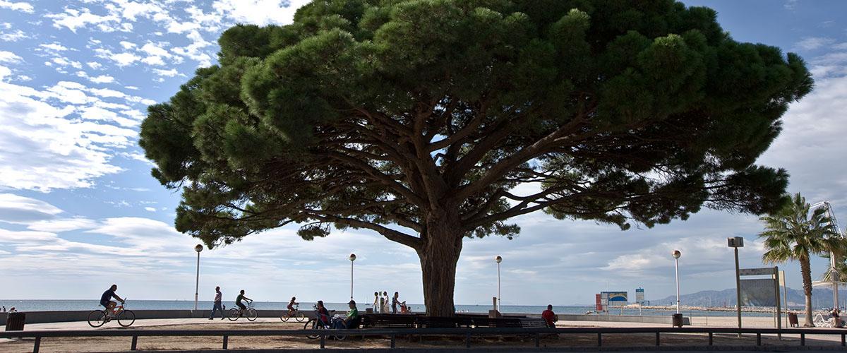 Costa Dorada - Poblaciones cercanas - Cambrils - Carrusel1