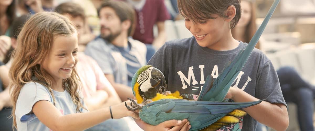 Espectáculo Aves del Paraíso PortAventura
