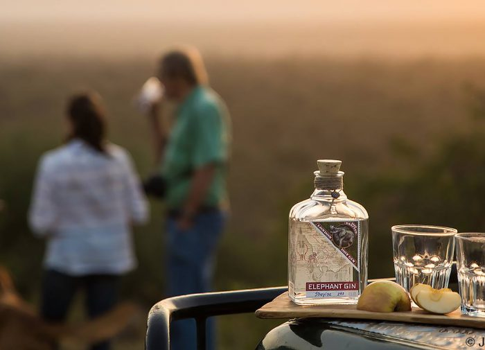 World Elephant Day: This brand mixes gin with conservation