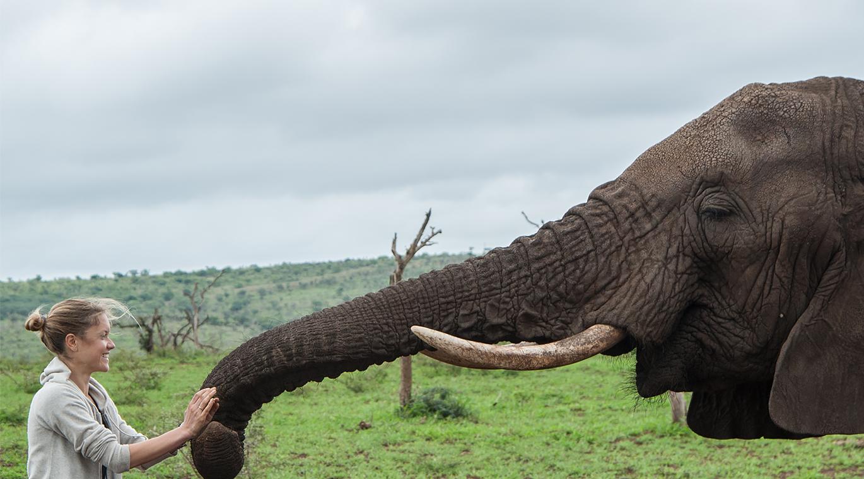 Elephant Gin Campaign 2
