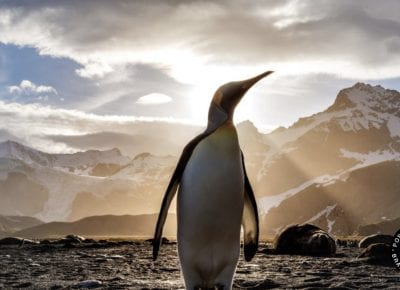 Weleda Partners With TerraCycle To Save the Penguins