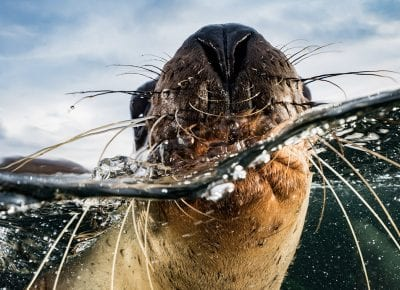 A call to action by Cristina Mittermeier, SeaLegacy