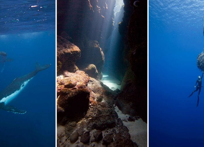 Autumn adventure: Swim with humpback whales