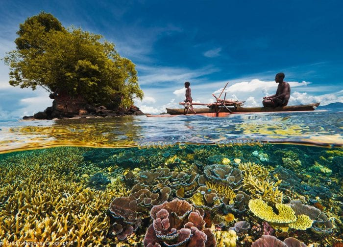Paradise lost: how to save Coral Reef Biodiversity