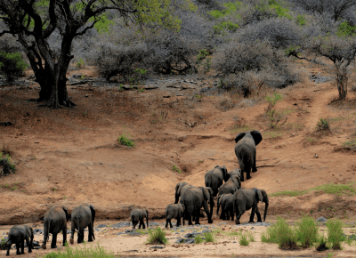 World Elephant Day: the luxury brands making strides in elephant conservation