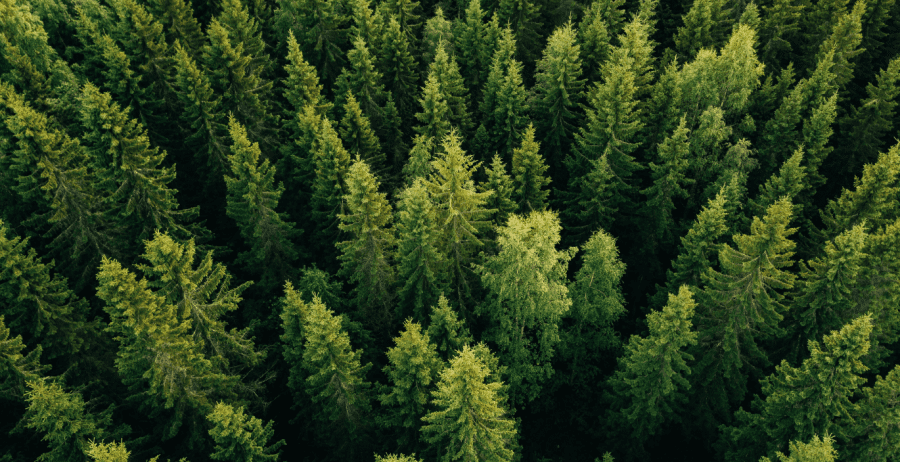 How do Positive Luxury brands value and respect nature?