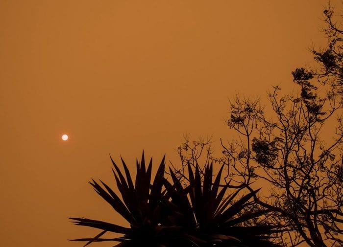 Incendies en Australie : 4 façons d'apporter votre aide