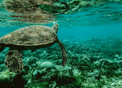 Comment célébrer la Journée mondiale des océans à distance
