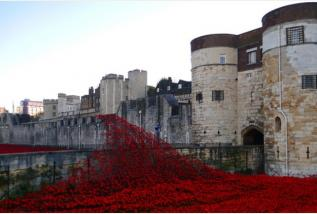 Tower Poppies: Campaign