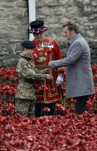 Tower Poppies: Last poppy planted