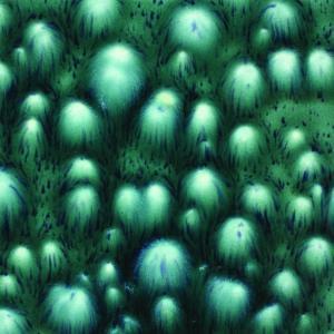 Bloomin' Blue (4OZ), stockcode:CG-974
