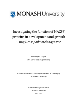 Investigating the function of MACPF proteins in development and growth using Drosophila melanogaster