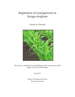 Regulation of cyanogenesis in forage sorghum