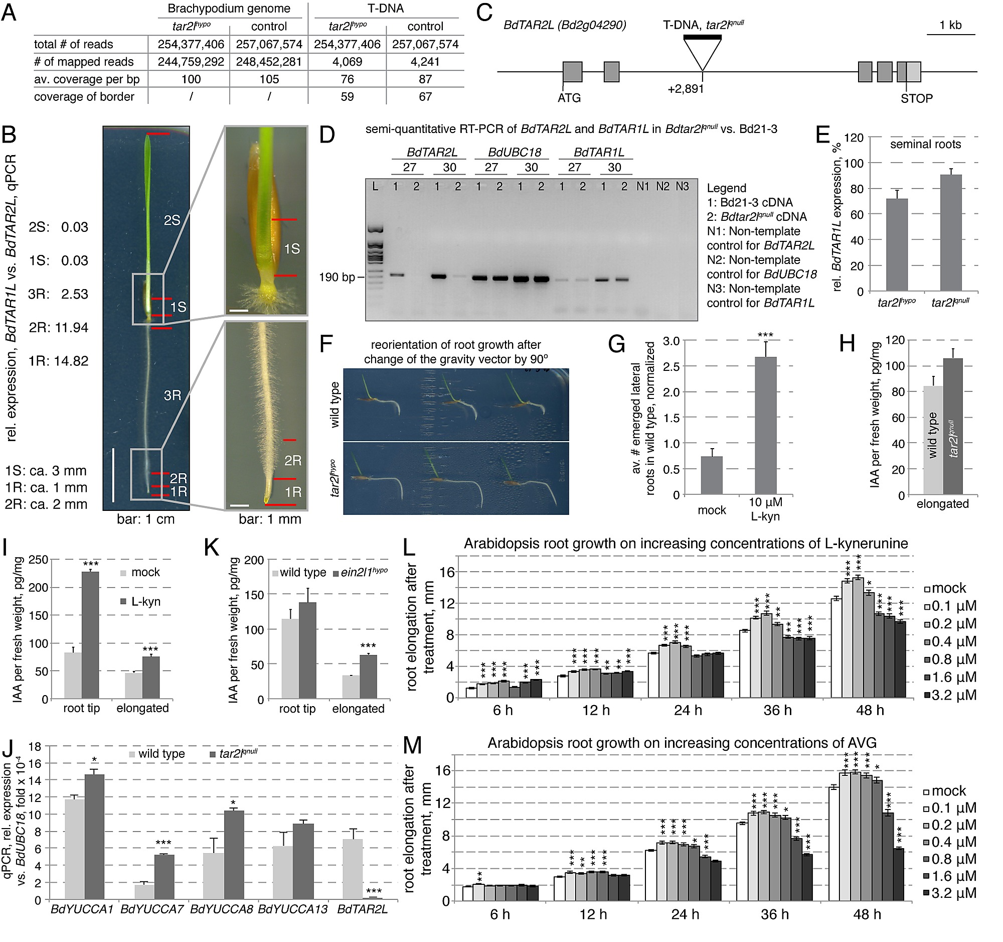 Disturbed Local Auxin Homeostasis Enhances Cellular Anisotropy And Ym 50 Wiring Schematic Figshare
