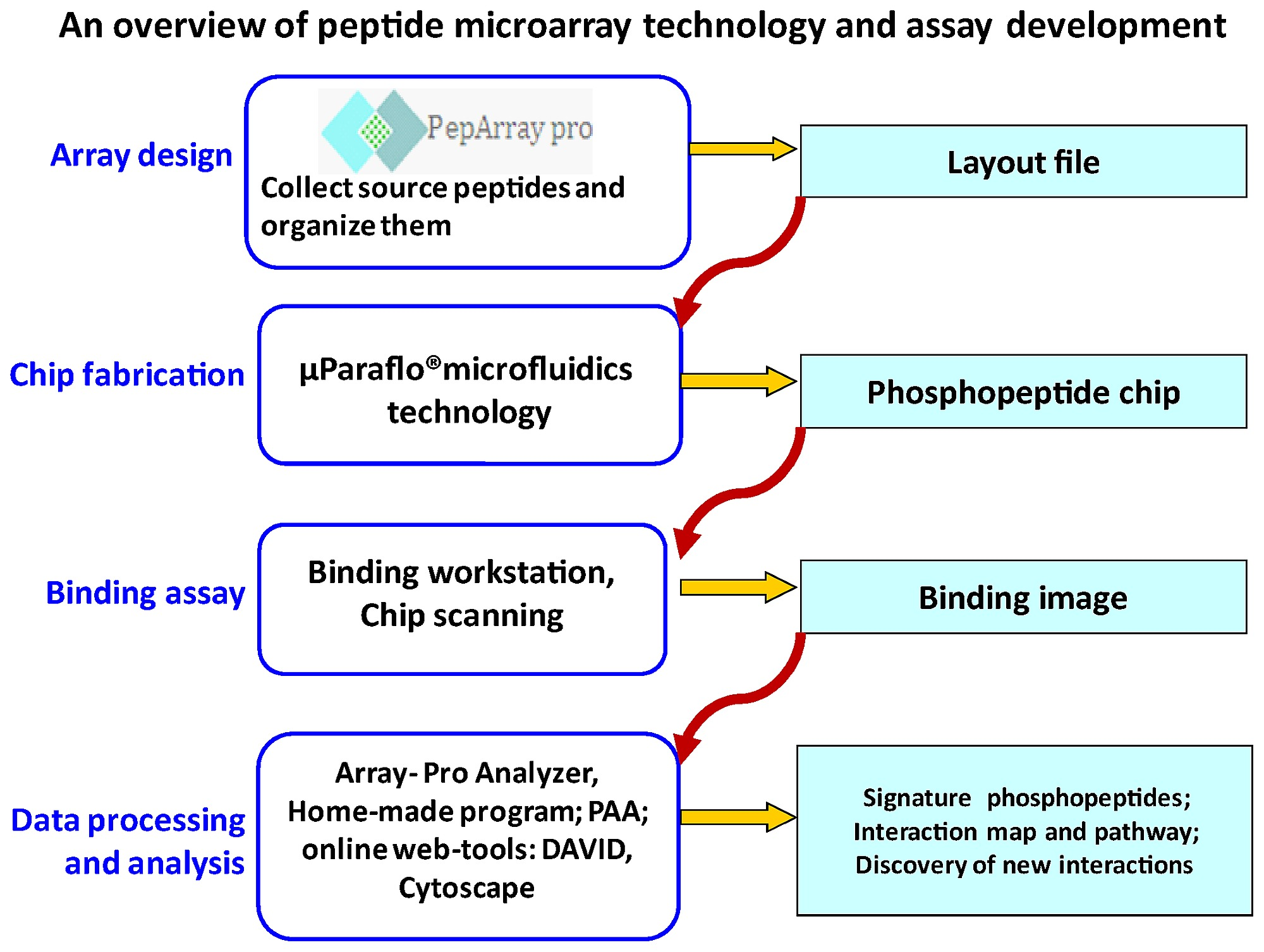 Work flow chart for the peptide microarray analysis of protein figure1 nvjuhfo Image collections