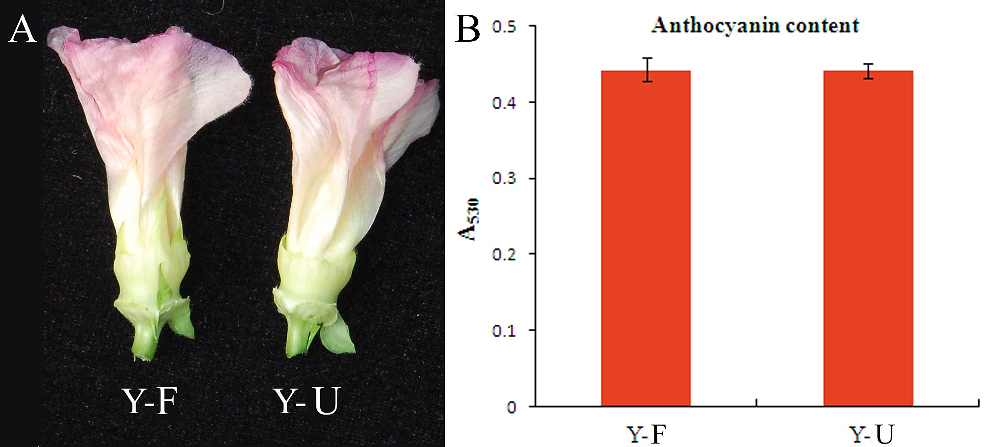 The Flavonoid Pathway Regulates the Petal Colors of Cotton Flower