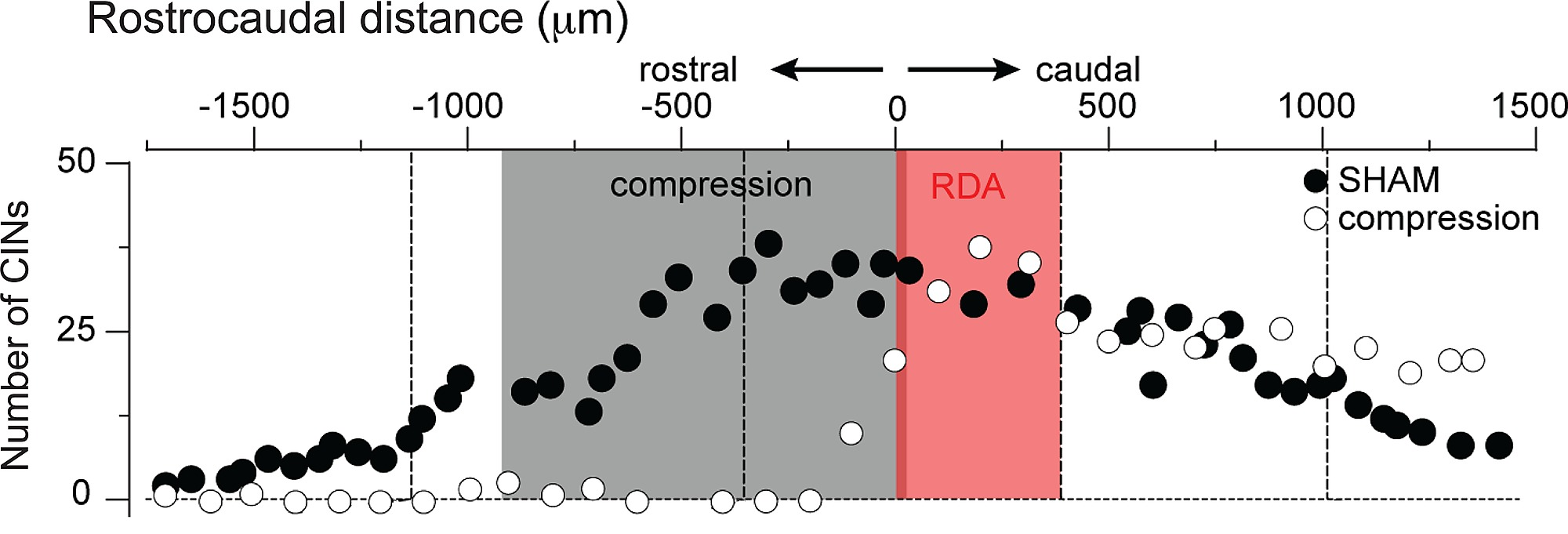 A Neonatal Mouse Spinal Cord Injury Model for Assessing Post-Injury ...