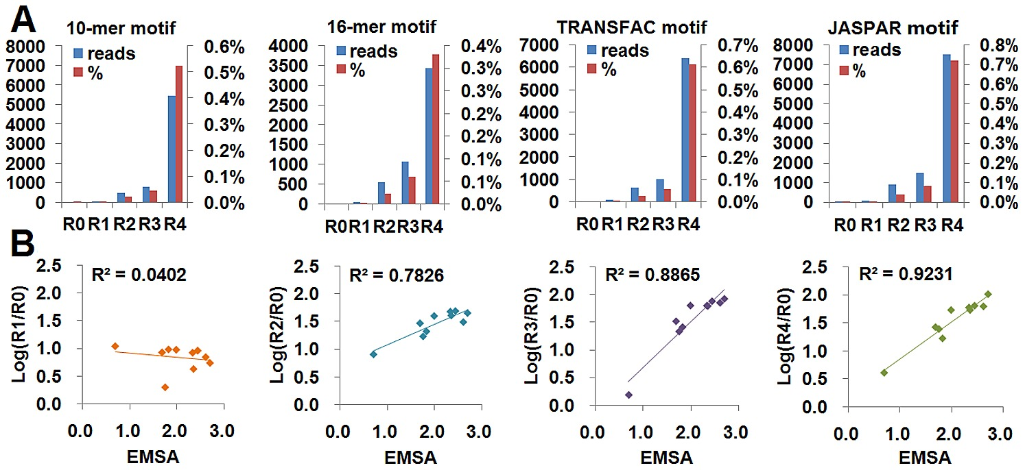 Evaluation of SELEX-Seq with known NF-κB motifs and EMSA-detected
