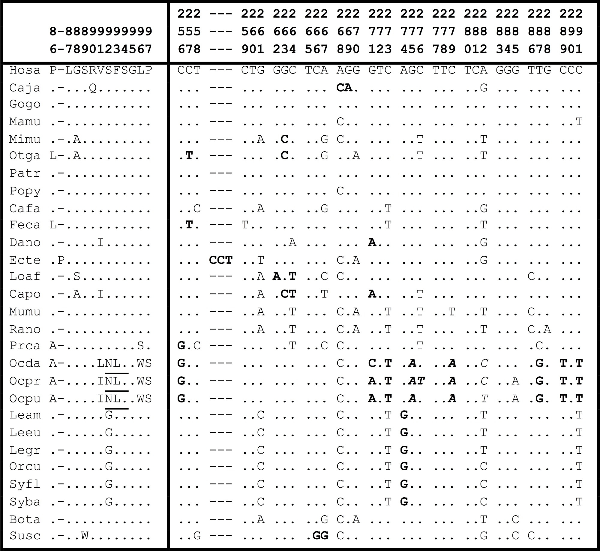 Amino acid and nucleotide sequences, corresponding to the 12