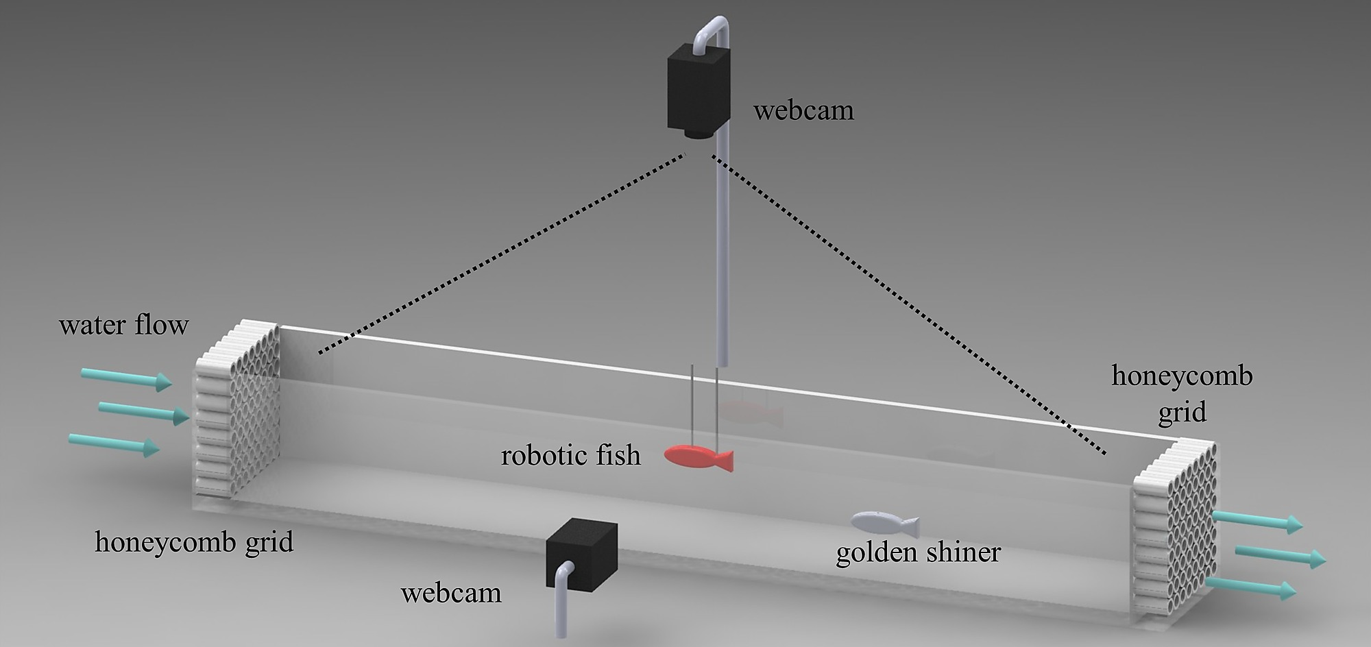Schematic Of The Experimental Setup Behavioral Experiment Tunnel Lighting Diagram Bioinspired Red Robot And An Individual Golden Shiner Swimming In A Section