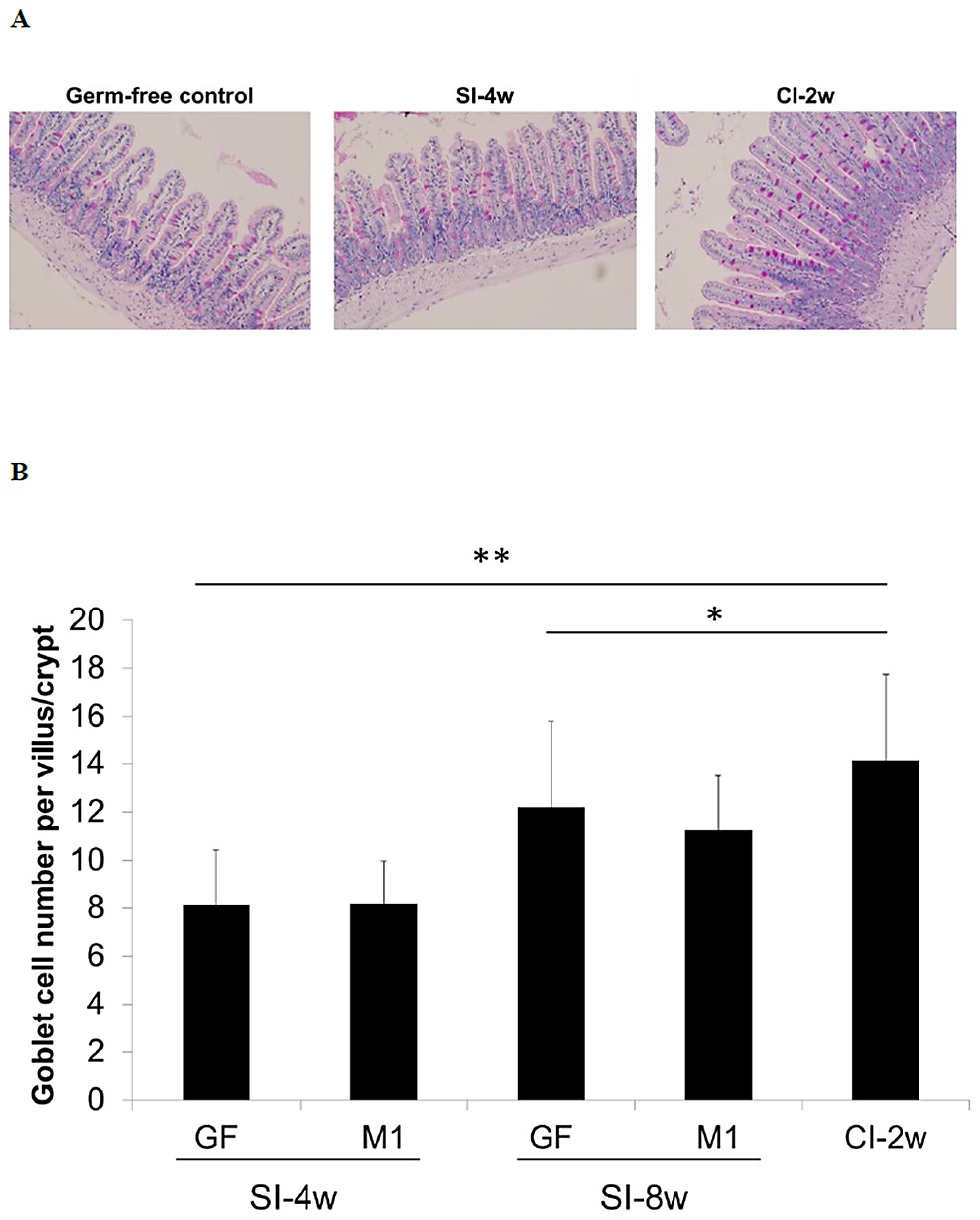 Lactobacillus Kefiranofaciens M1 M1 Increases Length Of Crypt