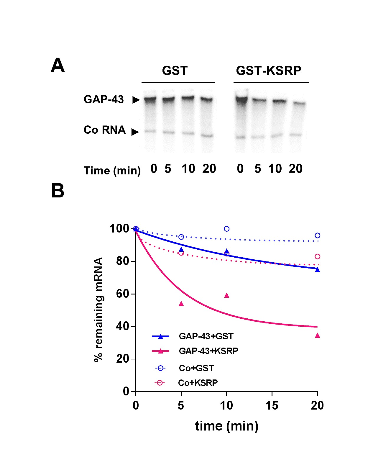 Ksrp Modulation Of Gap 43 Mrna Stability Restricts Axonal Outgrowth Ford Fusion V6 3 0 Fuse 48 Diagram Figshare