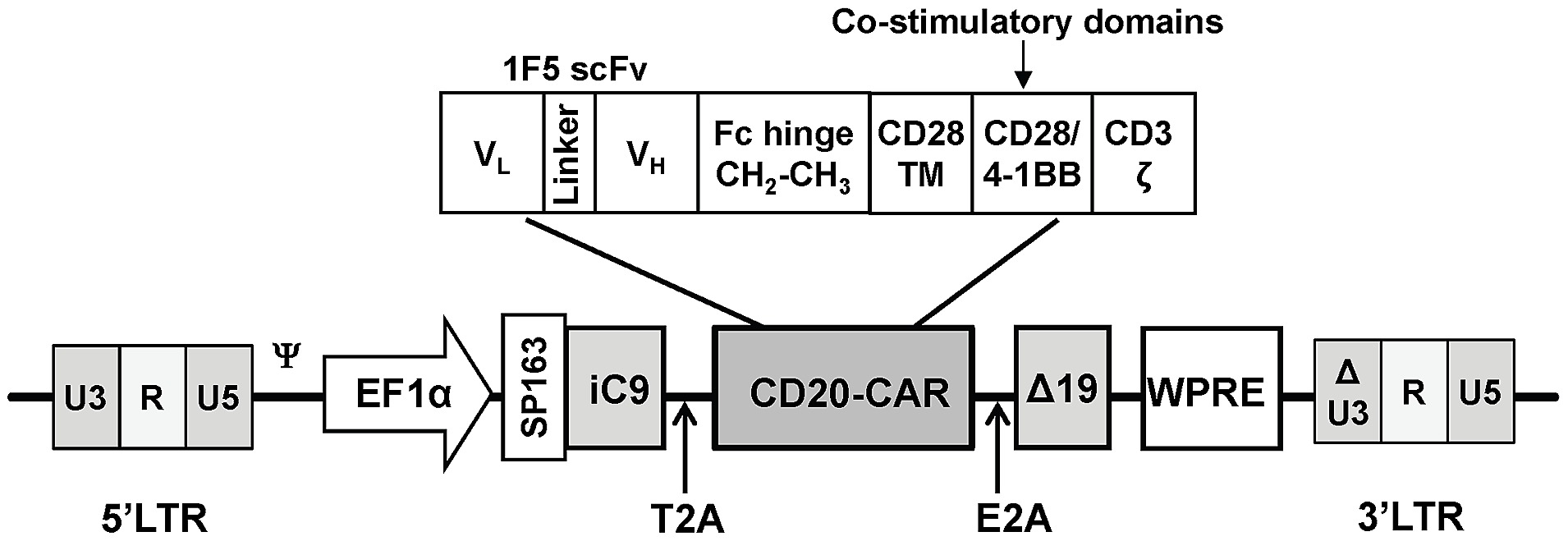 Schematic Diagram Of The Ic9 Cd20car 19 Lentiviral Vector Circuit