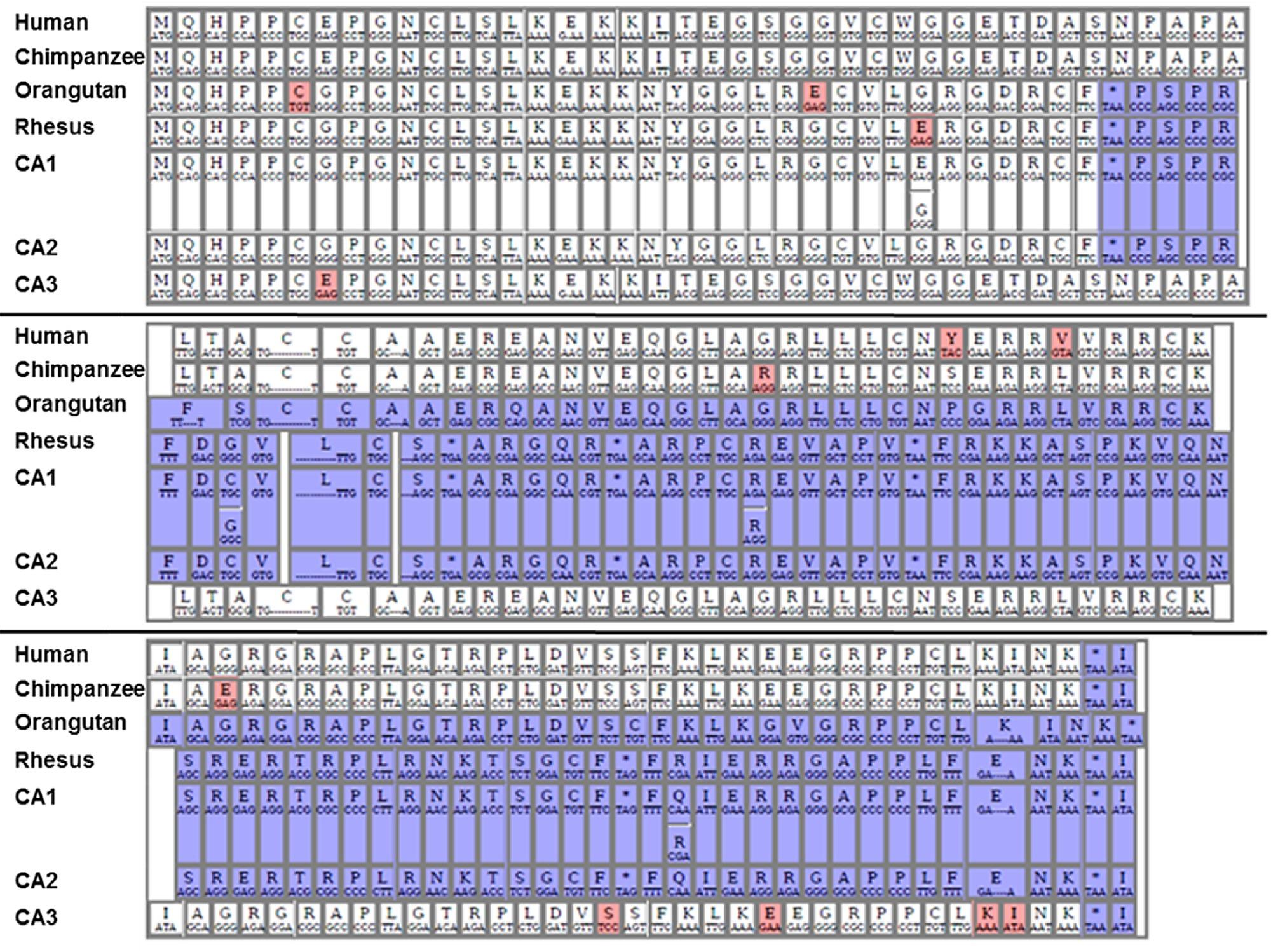 Ncym A Cis Antisense Gene Of Mycn Encodes De Novo Evolved Cde Ham Iii Wiring Diagram Figshare