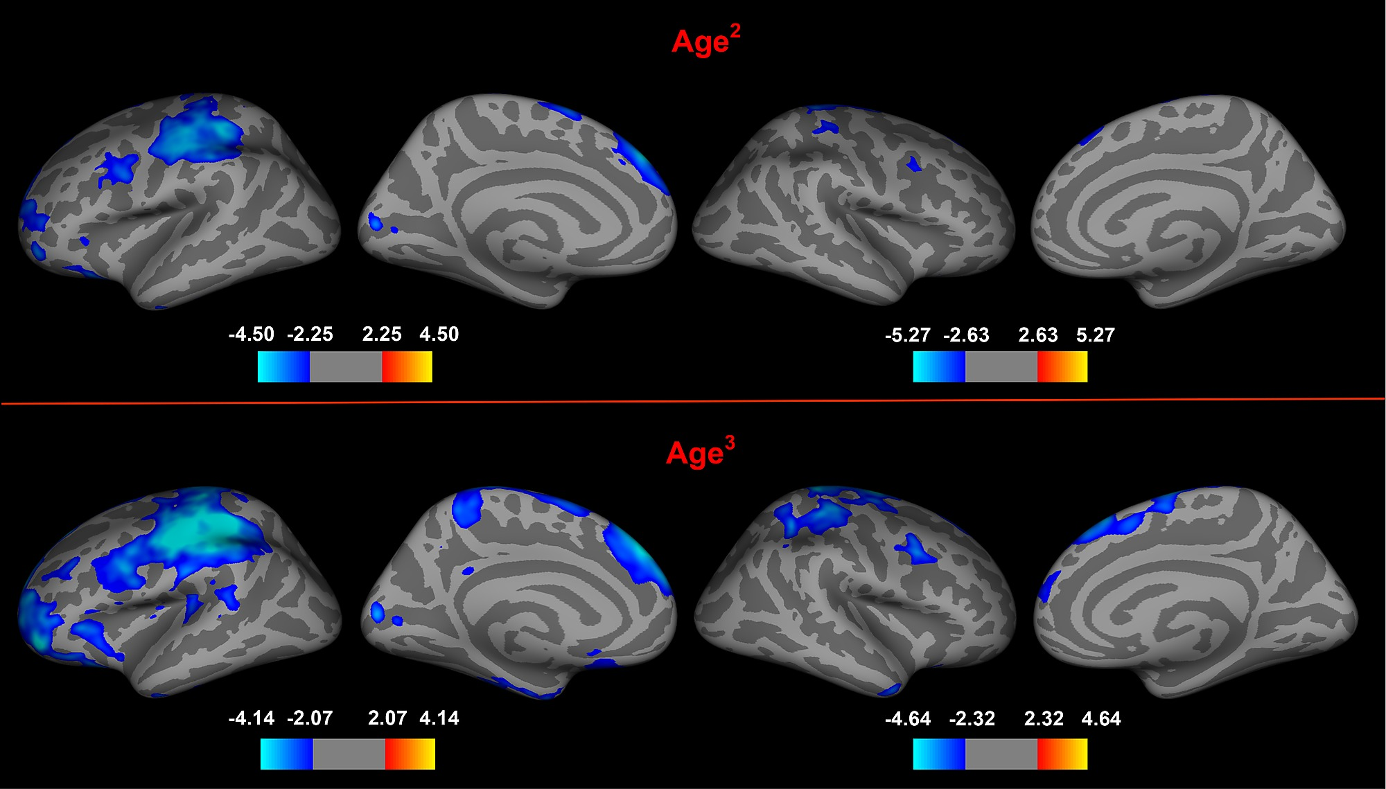The Heart Of Matter Adolescent Brain >> Adolescent Brain Maturation And Cortical Folding Evidence For