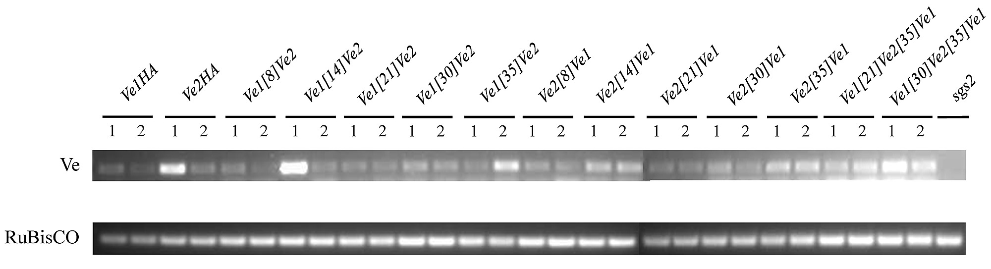 Functional Analysis Of The Tomato Immune Receptor Ve1 Through Domain