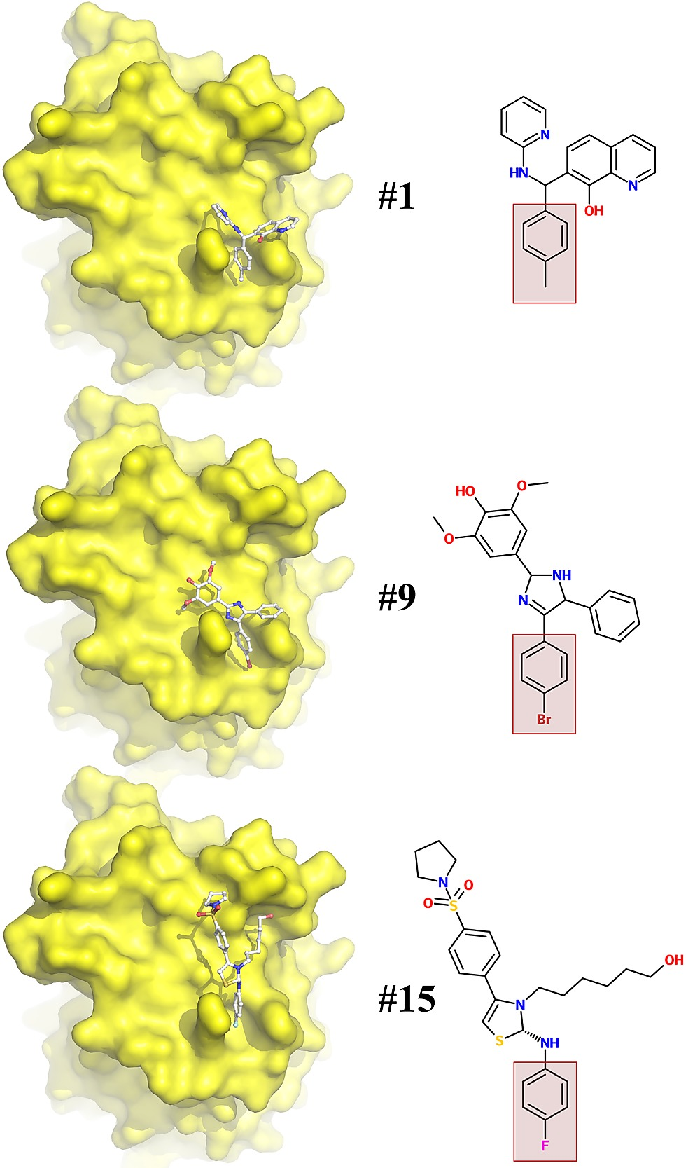 Crystal Structure Of The Vaccinia Virus Dna Polymerase Holoenzyme Original Hn 15 G Figshare