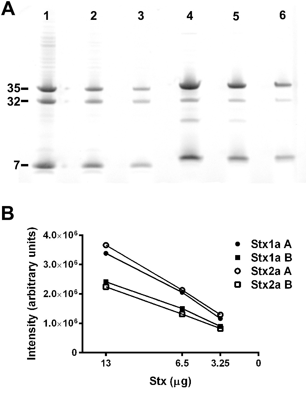 Comparisons Of Native Shiga Toxins Stxs Type 1 And 2 With