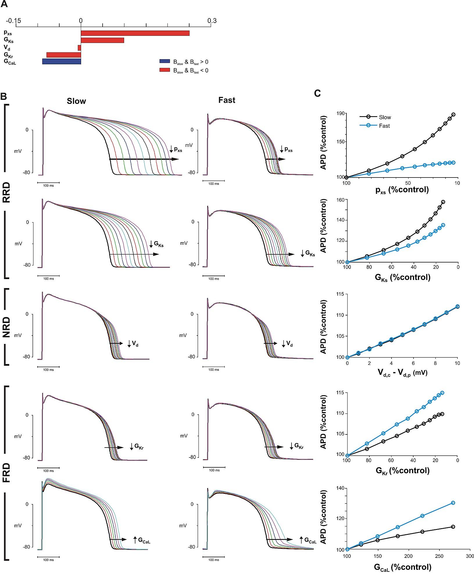 Comprehensive Analyses Of Ventricular Myocyte Models Identify American Standard Heritage 10 Heat Pump Wiring Diagram Figshare