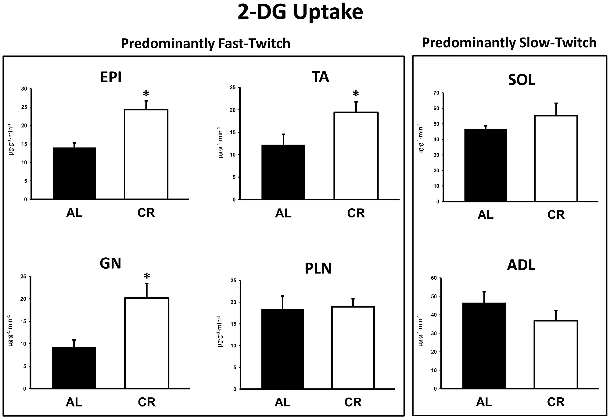 2-Deoxyglucose (2-DG) uptake in predominantly fast-twitch
