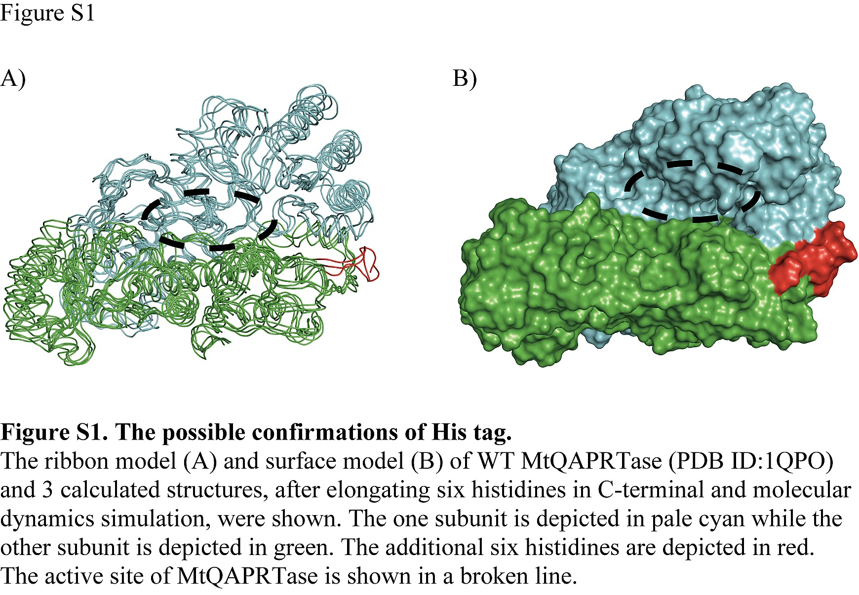 Biochemical Characterization Of Quinolinic Acid Figure Depicts The Typical Structures A Eukaryotic Plant Cell S1