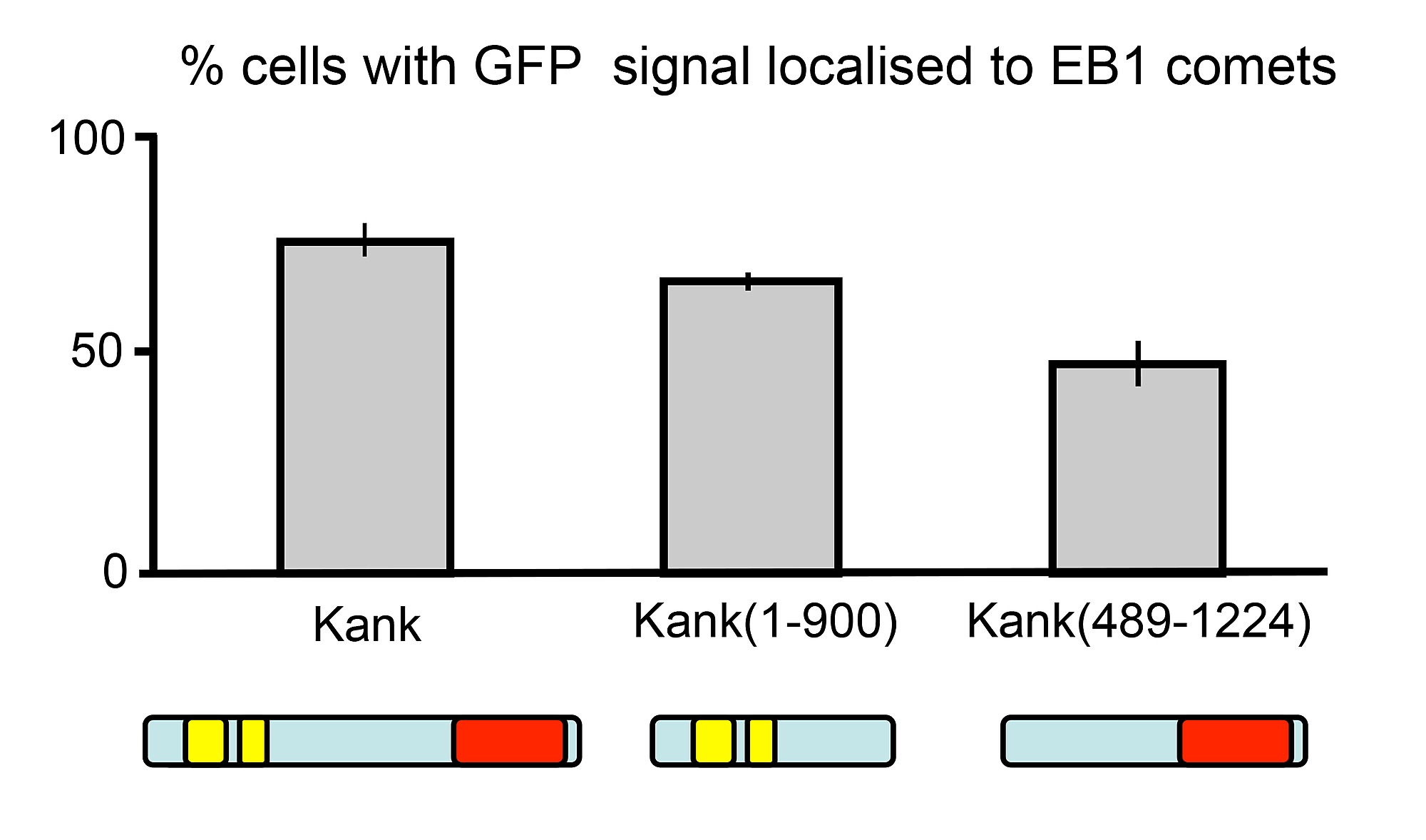 Kank Is an EB1 Interacting Protein that Localises to Muscle