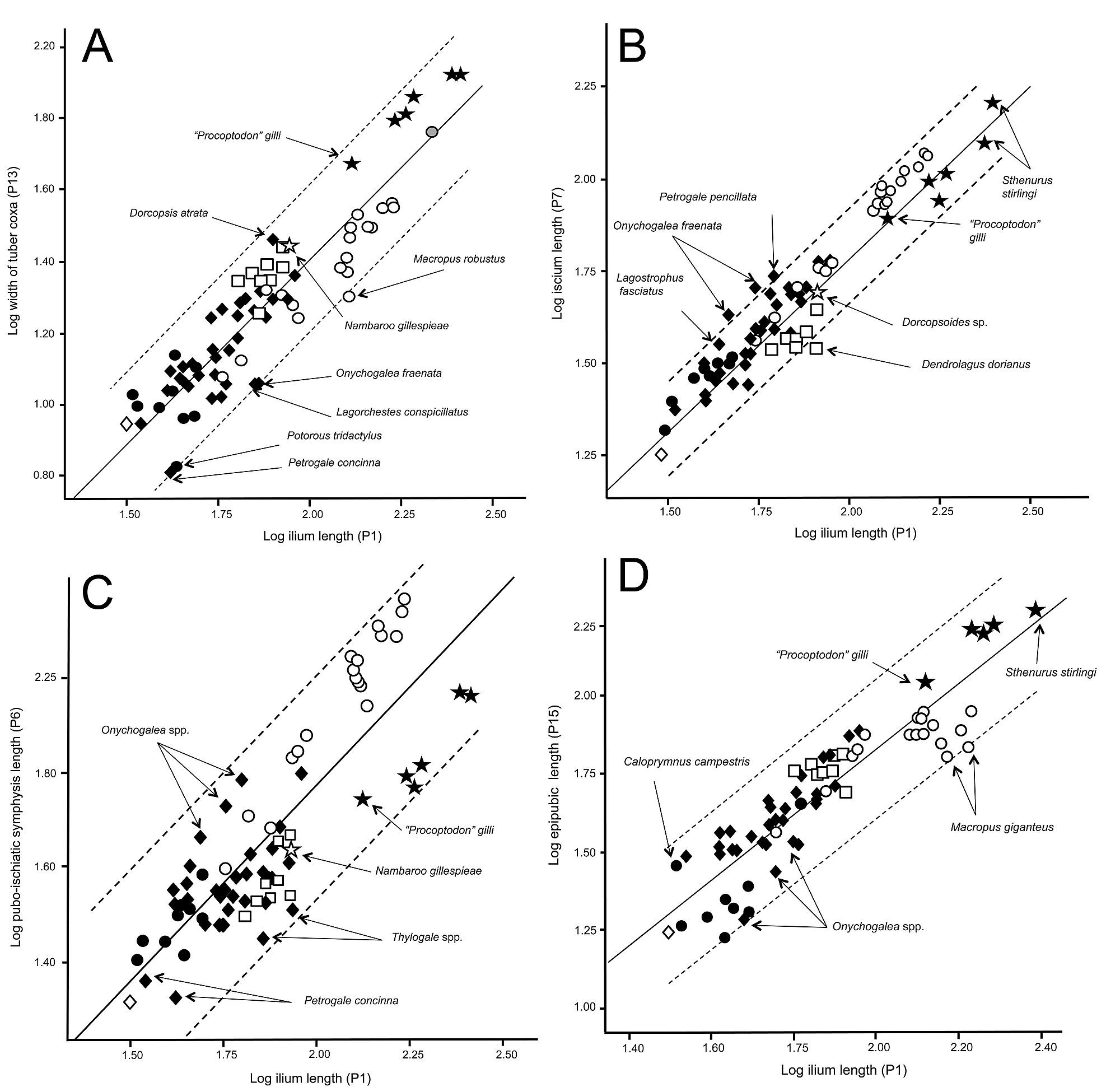 Locomotion in Extinct Giant Kangaroos: Were Sthenurines Hop-Less ...