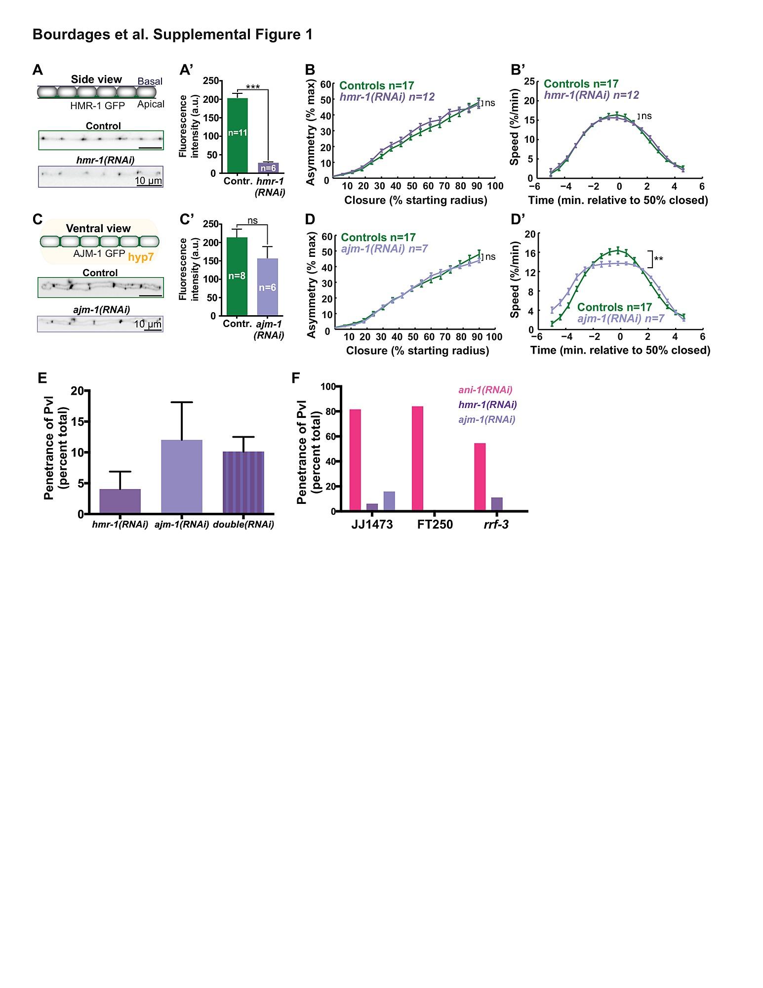 Quantitative Analysis of Cytokinesis In Situ during C
