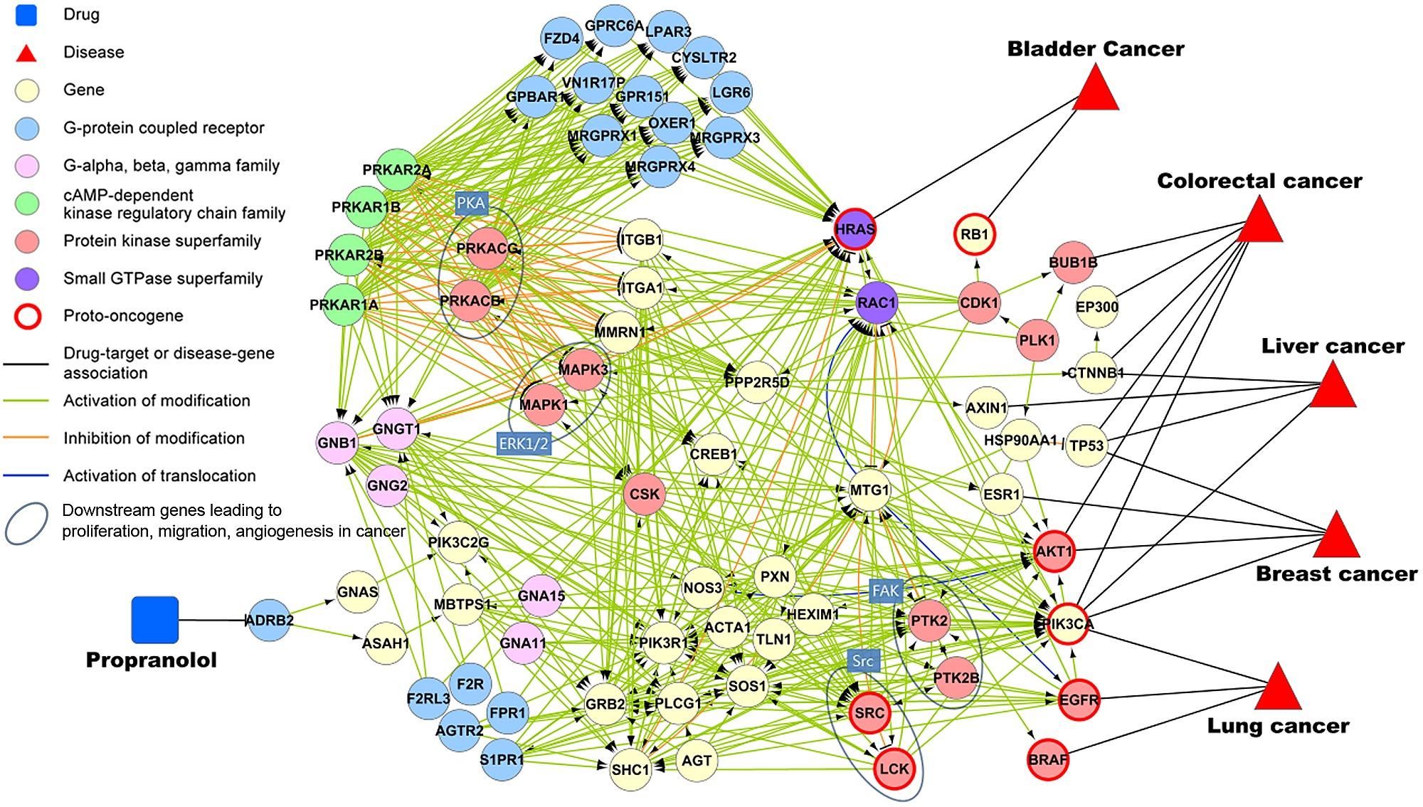 cancer genetic regulatory network)