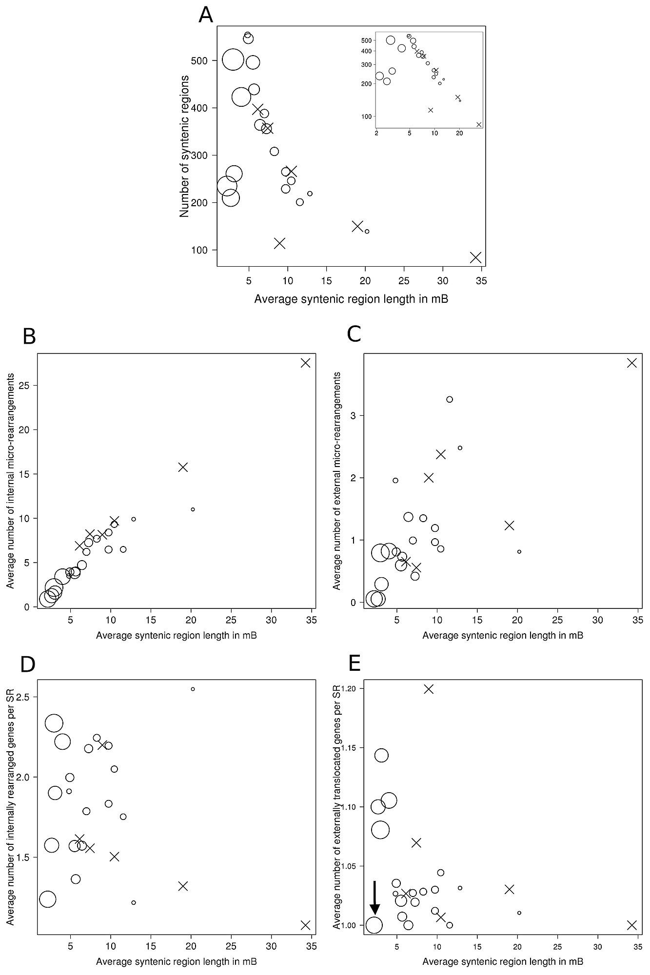 Relationship of syntenic region length, evolutionary