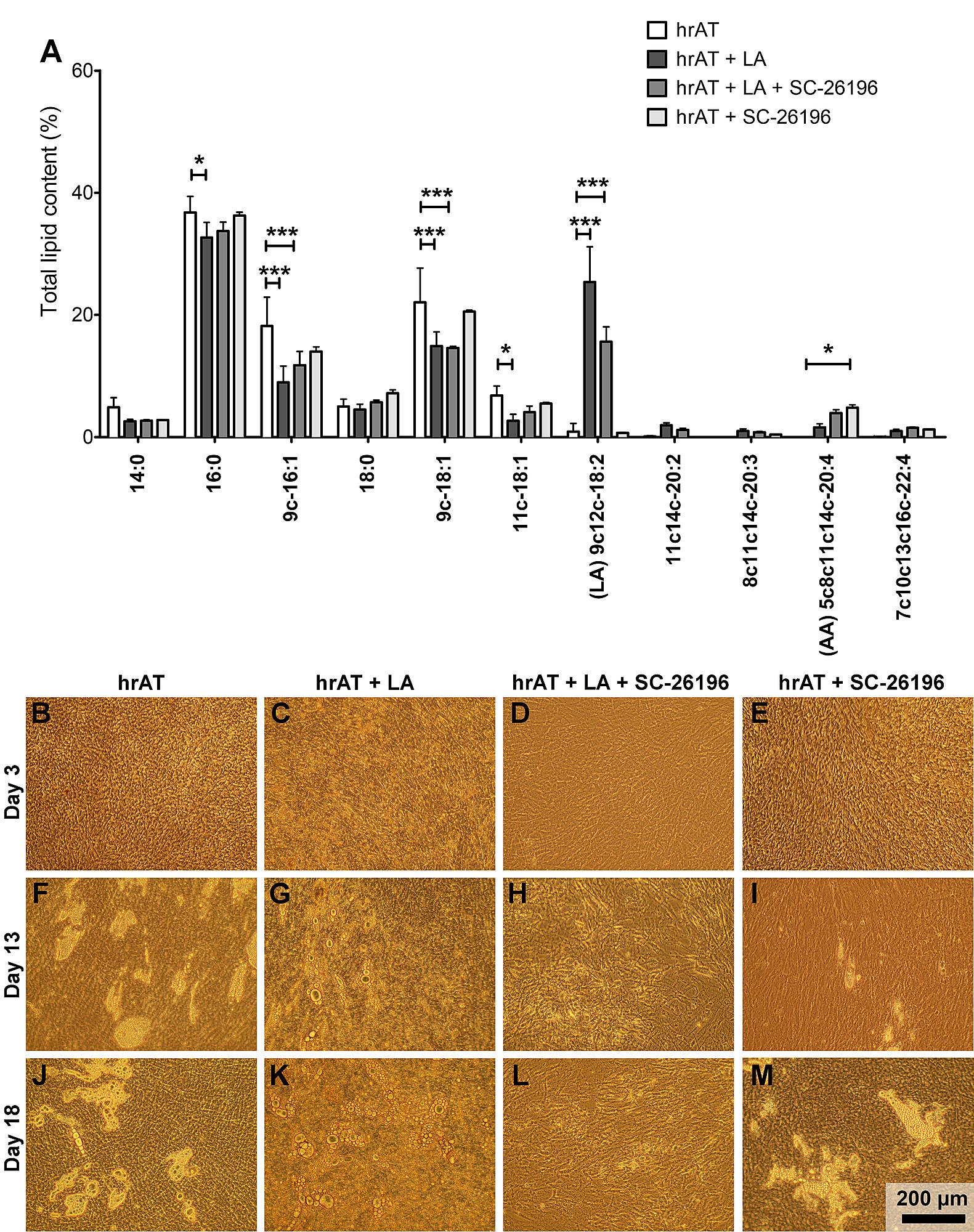 Linoleic acid supplementation of cell culture media