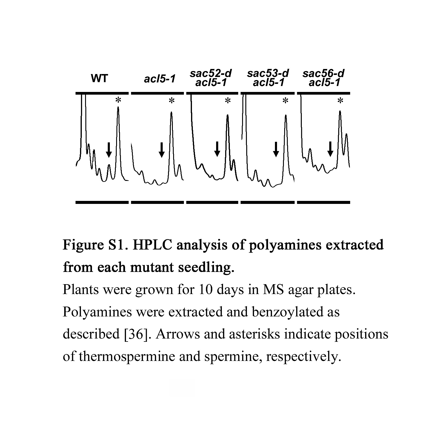 Mutations In Ribosomal Proteins Rpl4 And Rack1 Suppress The Black White Plant Cell Diagram What Numbered Arrow S1 Fig Hplc Analysis Of Polyamines Extracted From Each Mutant Seedling