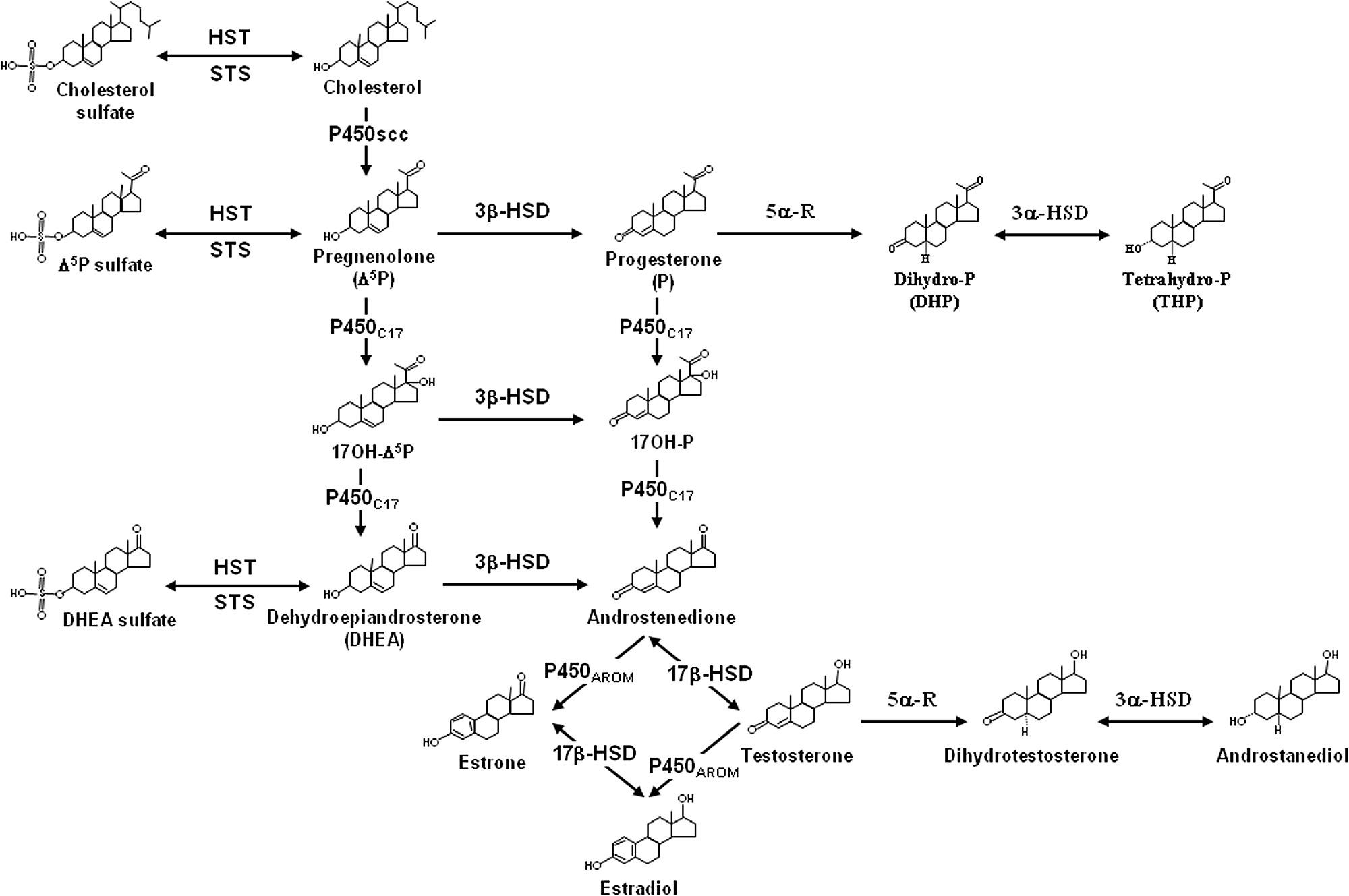 Simplified diagram recapitulating the biosynthetic pathways of simplified diagram recapitulating the biosynthetic pathways of neurosteroids in the brain of vertebrates ccuart Images
