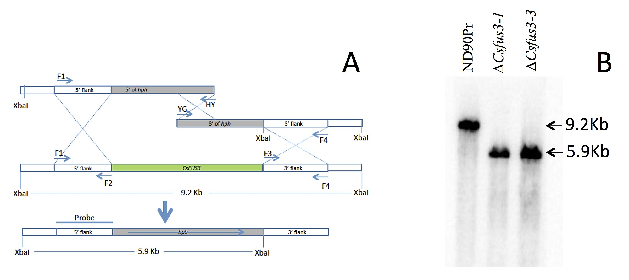 The Role of Mitogen-Activated Protein (MAP) Kinase Signaling