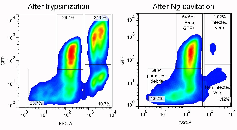 Trypanosoma cruzi intracellular amastigotes isolated by nitrogen flow cytometry analysis of intracellular amastigotes release by nitrogen cavitation fandeluxe Gallery